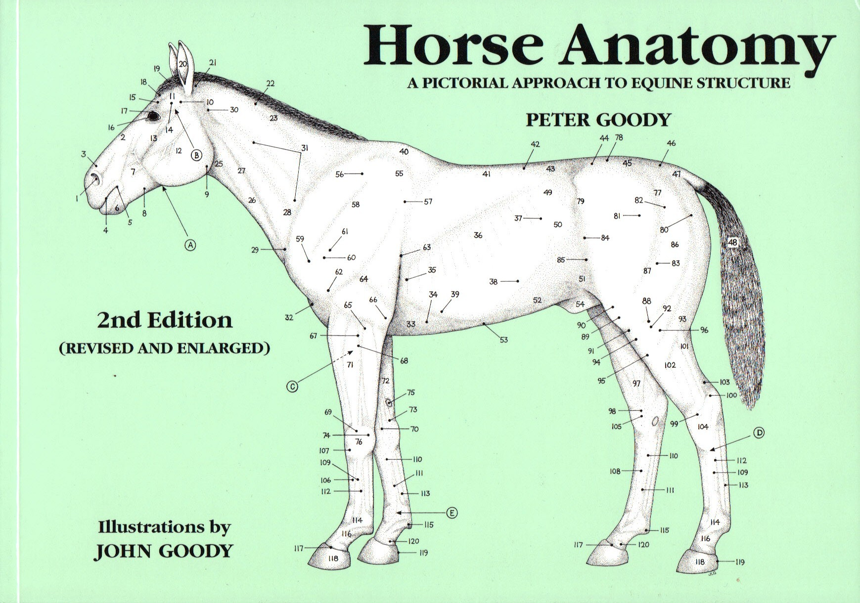Book Horse Anatomy A Pictorial Approach To Equine Structure by Peter ...