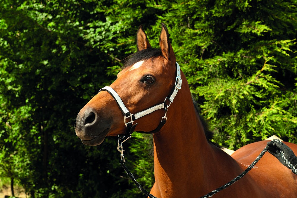 Silver Sparkle Headcollar and Leadrope Set from trot-online